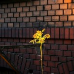 Offspring of Hope